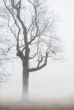 Foggy moody scene with leafless tree. In fog stock photography