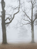 Foggy moody scene with leafless trees in fog. Outdoor royalty free stock photography