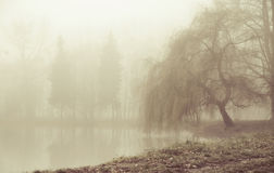 Foggy moring in peaceful place Stock Photography