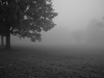 Foggy morning. Early morning fog on field in the autumn Stock Images