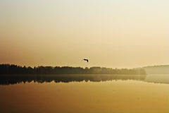 Foggy morning. Over water with a flying seagull Royalty Free Stock Photo