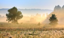 Foggy morning. Light over meadow with forest in background Stock Photography