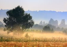 Foggy morning. A tree in morning light with delicate fog over meadows and hazy forest stripes. Poland, Swietokrzyskie Royalty Free Stock Photography