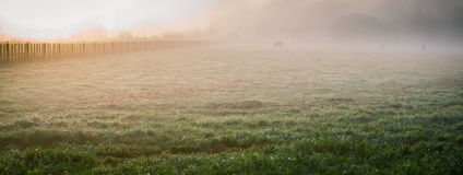 Foggy morning. Sunrise on meadow in a fog Stock Photography