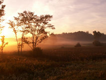 Foggy morning. Sunrise with fog over a field royalty free stock photo