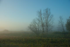 Foggy morning Royalty Free Stock Photos