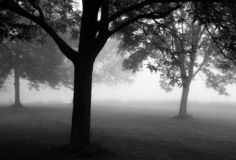 Foggy Morning. Trees in early morning fog Royalty Free Stock Images