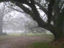Foggy Morning. No picnic today Royalty Free Stock Photos