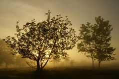 Foggy morning Royalty Free Stock Photography