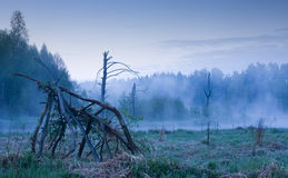 Foggy morning stock photography