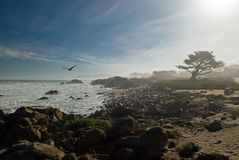 Foggy morning. Foggy picture of a beach at 17 Mile Drive, Monterey, California Royalty Free Stock Photos