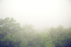 Foggy morning above the forest Royalty Free Stock Image
