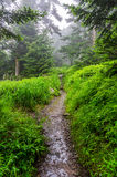 Foggy morning, Appalachian Trail, Great Smoky Mountains. A summer mornings fog along the Appalachian trail near Clingmans Dome in the Great Smoky Mountain Royalty Free Stock Images