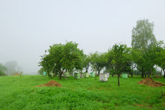 Foggy morning in apple orchard with beehives Royalty Free Stock Photography
