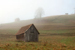 Foggy Morning At Black Forest Royalty Free Stock Image