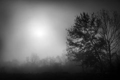 Autumn morning fog Royalty Free Stock Images