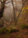 Foggy morning autumn fall scene on forest Stock Images