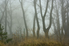 Foggy morning. Autumn forest in the morning in a fog royalty free stock photography