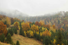 Foggy morning in the autumn forest Stock Images