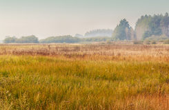 Foggy morning in the autumn over the meadow Stock Images