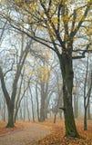 Foggy morning in autumn park Stock Photos