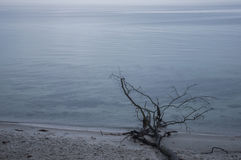 Foggy morning. On Baltic sea. Nature of the North Stock Image