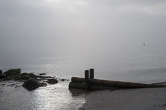 Foggy morning. On Baltic sea. Nature of the North Stock Images