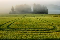 Morning. a beautiful summer sunrise in the field Royalty Free Stock Photo