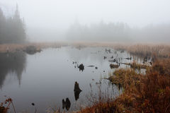 Foggy morning beaver house and pond Stock Image
