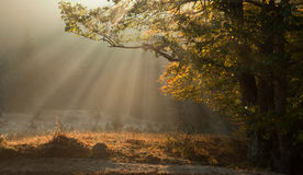 Autumn morning fog and sun rays Royalty Free Stock Photo