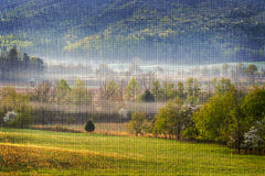 Foggy Morning at Cades Cove. A light layer of fog hangs over a field at Cades Cove. White dogwoods are flowering and the delicate green of new leaves covers the stock photo