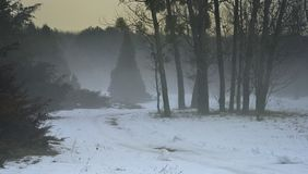 Foggy morning. This is foggy morning in Caucasus garden in winter Royalty Free Stock Image