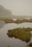 Foggy Morning in Coastal Maine. Wells National Estuarine Research Reserve, between Ogunquit and Wells, Maine stock photo