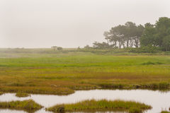 Foggy Morning in Coastal Maine. Wells National Estuarine Research Reserve, between Ogunquit and Wells, Maine stock image