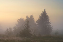 Foggy morning. Cold foggy morning in the countryside Royalty Free Stock Photo