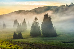 Foggy morning in conifer forests at sunset Royalty Free Stock Images