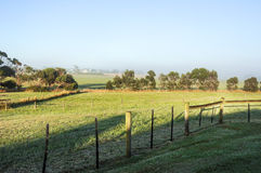 Foggy morning. In the countryside of Australia Stock Images