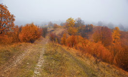 Foggy morning on countryside road in the autumn Royalty Free Stock Images
