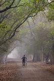 Foggy morning and cyclist Royalty Free Stock Photo