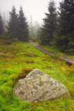 Foggy morning in dead forest. (Jizerské hory royalty free stock photos