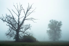 Foggy morning. Foggy morning with dead free Royalty Free Stock Photo