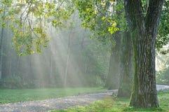 Foggy morning in Deer Lake Park Stock Images