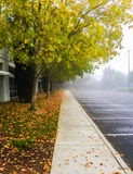 Foggy morning with dry leaves on the ground Royalty Free Stock Image