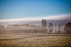 Foggy morning on a farm Royalty Free Stock Photo