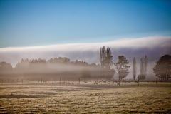Foggy morning on a farm. Beautiful foggy morning on a deer farm Royalty Free Stock Photo