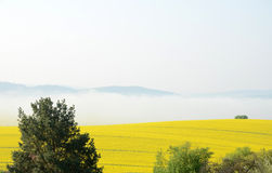 Foggy morning. Field with covered with fog stock photos