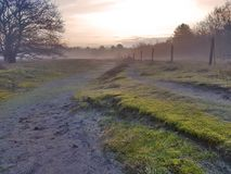 Foggy morning in the fields. Forest in Holland, the Netherlands. Sunrise over the mist Stock Photo