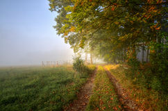 Foggy morning. First rays intersecting fog in the morning of November Royalty Free Stock Image