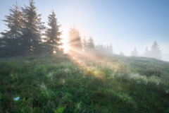Foggy morning Stock Images