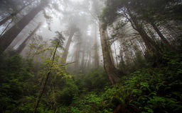 Foggy morning in a forest Stock Photos